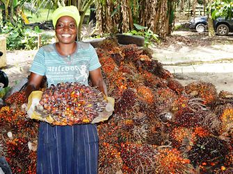 A female worker at Justice Farms holding a bunch of oil palm fruits